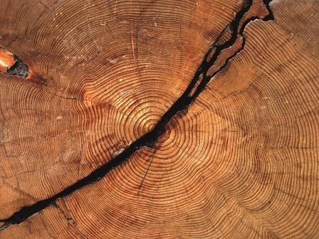 hr_sequoia_doorsnede_web_-_kopie_3x4.jpg